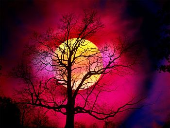 free-Christian-counseling-2438_Alive_With_Color,_Beautiful_Sunset