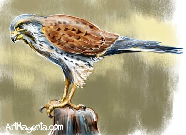Common Kestrel by ArtMagenta