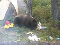 キャンプ地に現れた野生のクマさんと自撮りするロシア人の余裕っぷり。