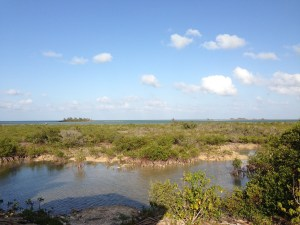 The mangroves behind Beneby's (and most of Mastic Point)