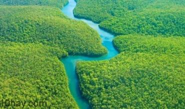 Những điều bí ẩn trong rừng Amazon khiến bạn không khỏi ngạc nhiên