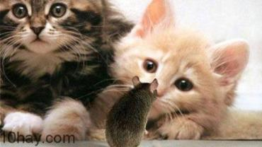 10 lợi ích của việc nuôi mèo cho sức khỏe của bạn
