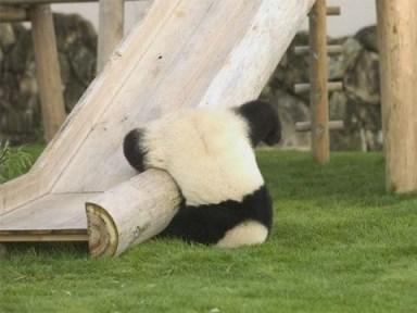 Panda Failあちゃー