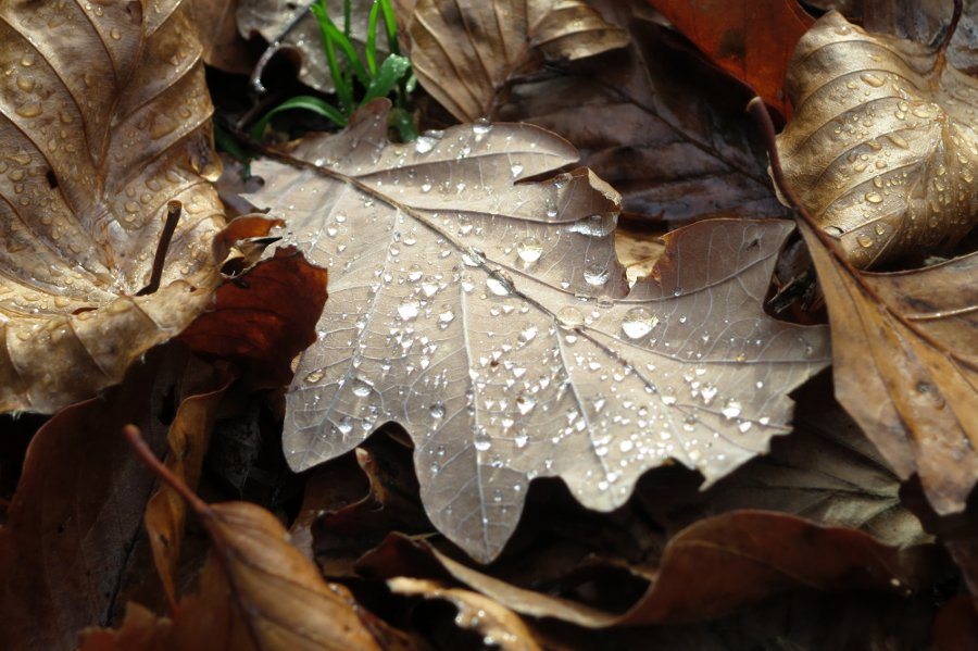 Herbst am Herthasee