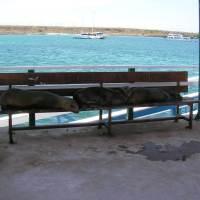Wordless Wednesday - Please take a seat