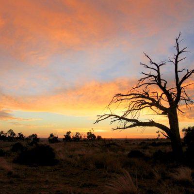 "Morning Light, Mungo National Park  <a href=""http://19onephotography.com/?p=99526"">Buy Now</a>"