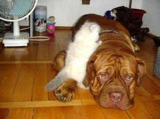 Dog and Cat Stories