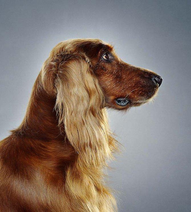 Dogs… Photographer Jill Greenberg