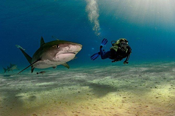Underwater Photos…. Photographer Brian Skerry