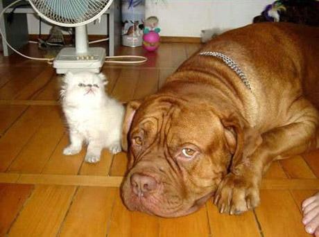 catanddogstories02ab02.jpg