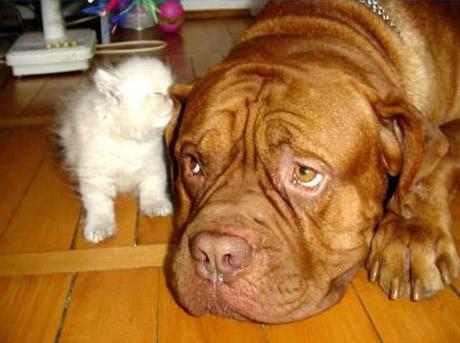 catanddogstories04zv04.jpg