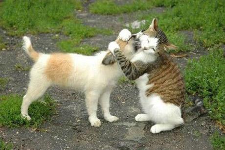 catanddogstories14op4.jpg