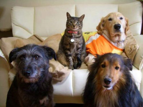 catanddogstories16yj7.jpg