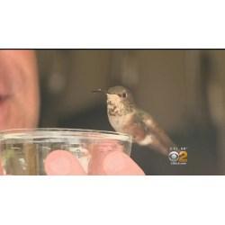 Small Crop Of Where Do Hummingbirds Sleep