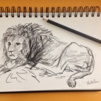 Drawing of the day: Lion
