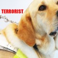 Kanine Terrorist Grounds Flight: Blind man and guide dog kicked off plane – passengers leave with him