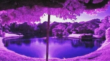 REST IN PURPLE