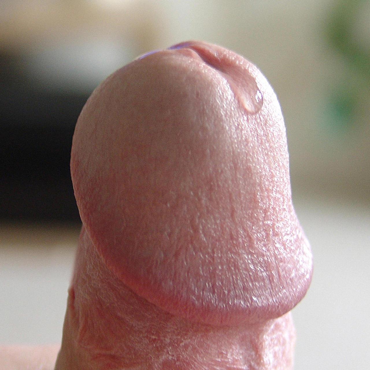 large penis precum