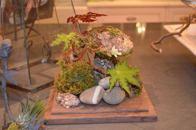 Begonia and stones
