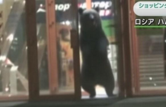 クマがショッピングセンターで大暴れの衝撃映像…ロシア