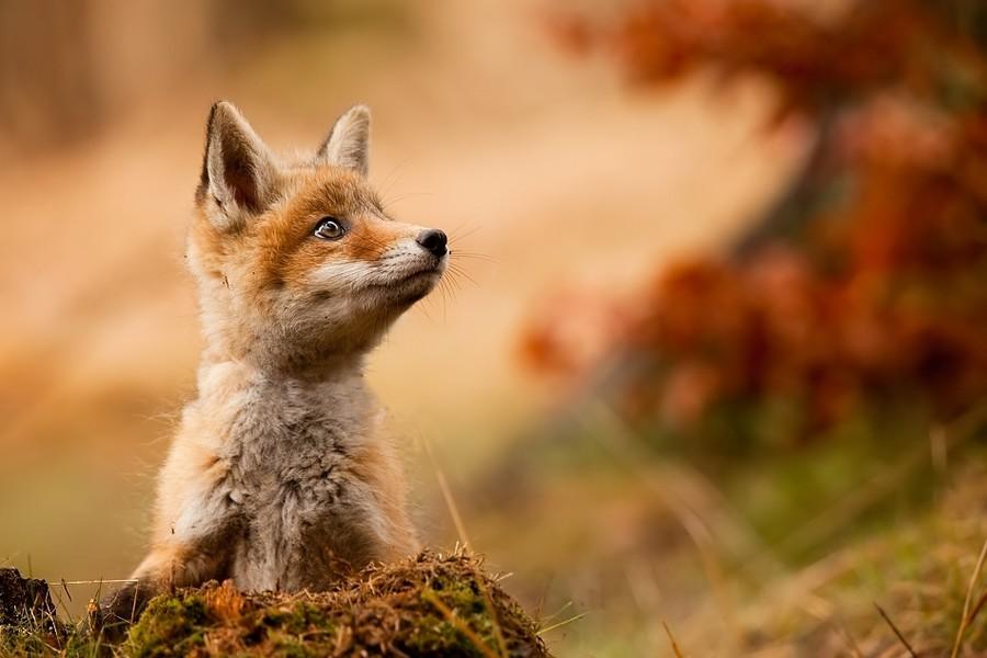 秋を感じる動物たちの画像スレ