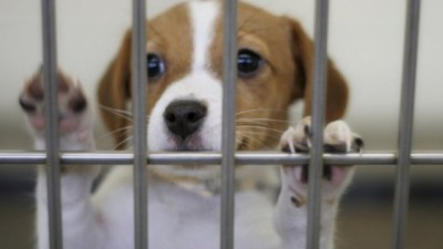 ペット業界の裏側が酷すぎると話題に…売れない犬は生きたまま冷蔵庫へ