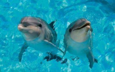 若い女性の尻を激しく責める畜生イルカが話題に(動画)
