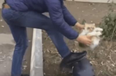 身動きできないネコで靴を磨く衝撃映像がネットで話題に
