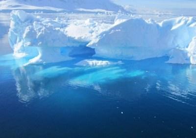 【画像】南極の海底にいる金色の虫がヤバいwwwwwwww