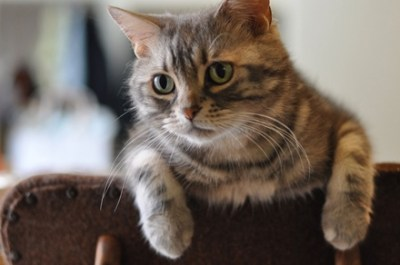 【ヤクザ】元山口組「猫組長」現在、悠々自適の暮らしができる理由