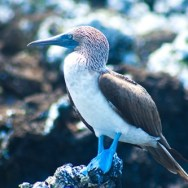 40 Facts You Need to Know About the Galapagos Islands