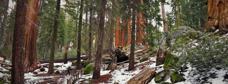 Rob Taylor hiking in Grant Grove header