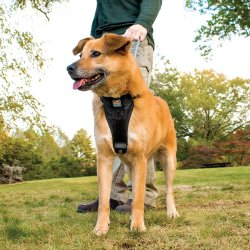 Nifty Dog Harness Dog Harness Options Dogs Reddit Your Dog Pet Territory Harness Dogs That Chew Harness