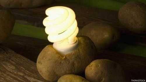 Lampada acende por 40 dias com energia de uma batata!