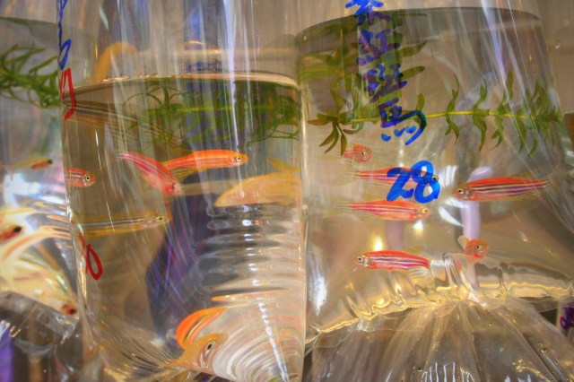 The Departure Lounge, Fish Market   Pet Fish for Sale {Hong Kong