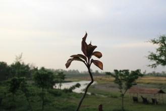 En pays Tharu, près du parc national du Chitwan au Népal