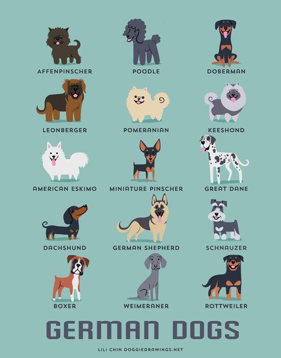 From GERMANY: Affenpinscher, Poodle, Doberman, Leonberger, Pomeranian, Keeshond, American Eskimo, Miniature Pinscher, Great Dane, Dachshund, German Shepherd, Schnauzer, Boxer, Weimeraner, Rottweiler.