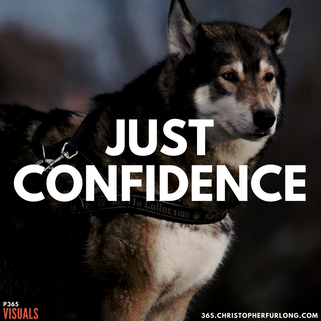 P365 2018: Day #031: Just Confidence