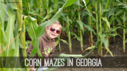 corn mazes in georgia
