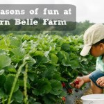 Southern Belle Farm : Four seasons of farm fun