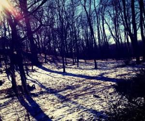 362. Step Outside for the Winter Wonders Scavenger Hike
