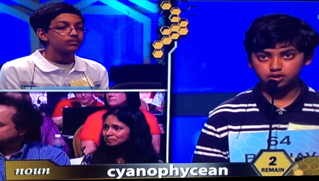 Spelling Bee Games For 12th Graders - 8th grade spelling bee games ...