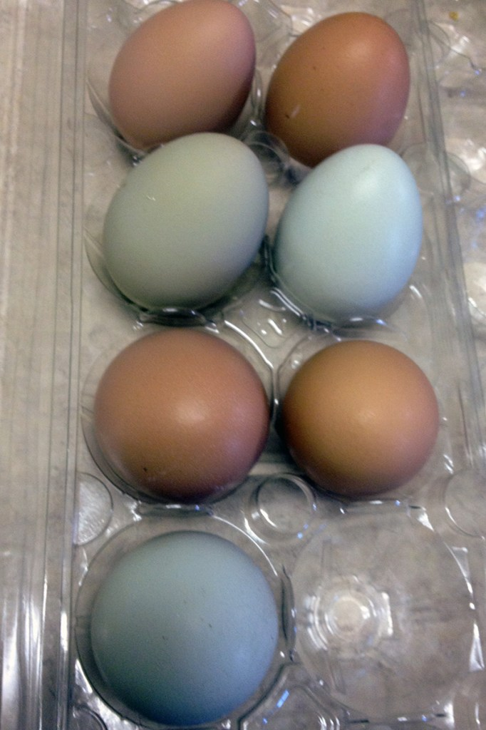 Seven eggs, including a new green one.