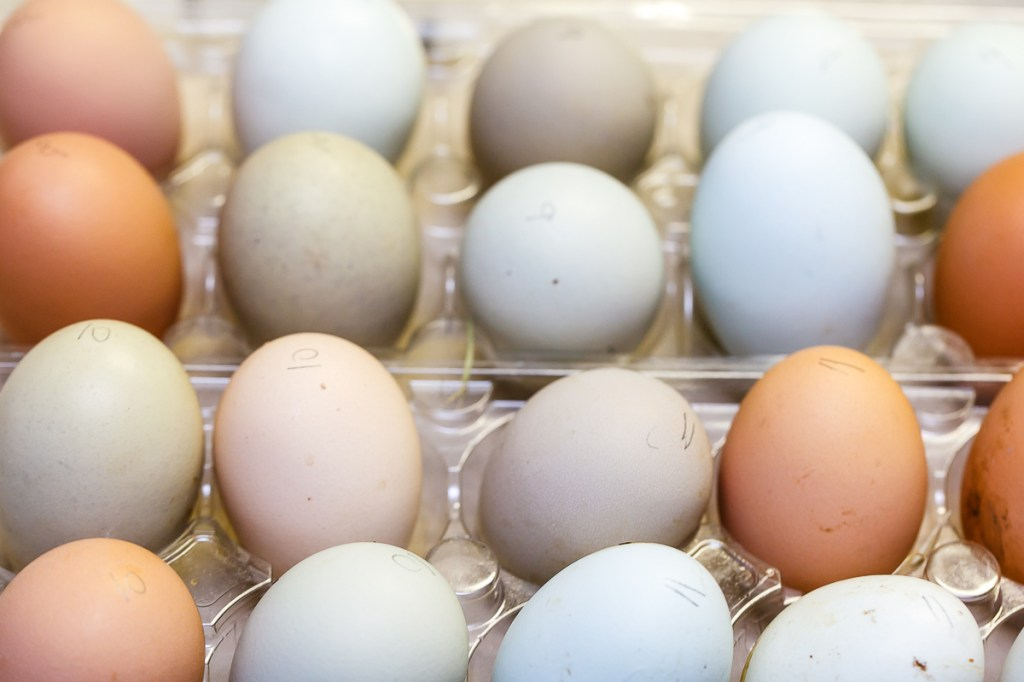"Fresh Eggs - Capturing the Elusive ""Pink"" Egg"
