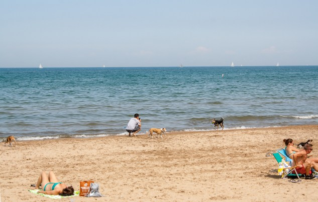 Dog beach on Lake Michigan, Chicago