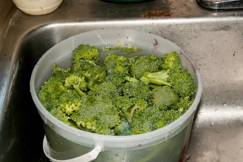 Cleaning and prepping fresh broccoli