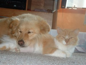 Dogs and cats can live together in peace and love each other as friends