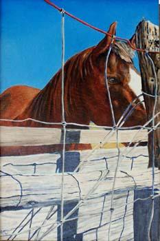B_ALM_Magdalena Horse_12x18_oil