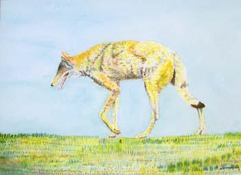 """Bosque Coyote #2 16"""" x 12"""""""