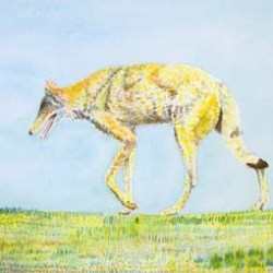 "Bosque Coyote #2 16"" x 12"""